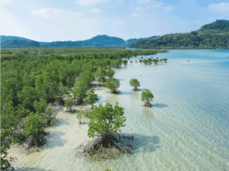 La mangrove d'Okinawa au Japon