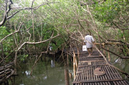 Le parc de la mangrove de Pappinisseri en Inde