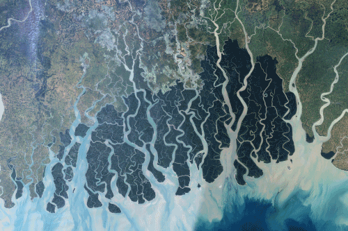 The mangrove of the Sundarbans