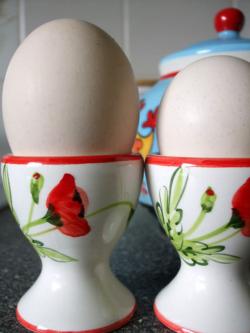 Boiled fresh eggs